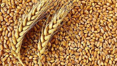 No ban on wheat exports