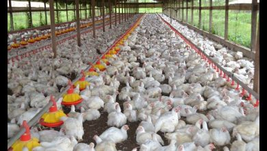 poultry sector low-growth