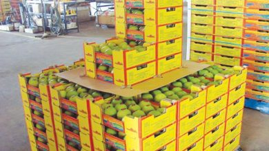 National Assembly calls meeting discuss issues export mango witness 70 drop export volume