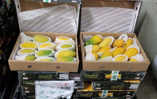 CCP cargo operating airlines pay compensation mango exporters consignment