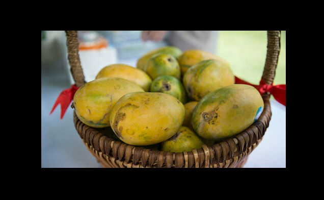 Pakistan decided send mangoes delicious taste specific aroma Head States existing potential